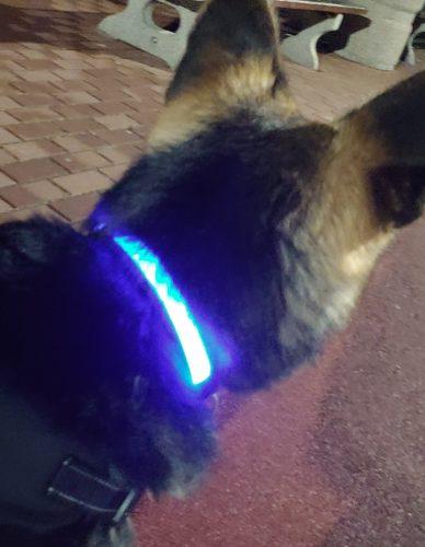 Obroża świecąca USB LED Pet8 FGG Superbright photo review