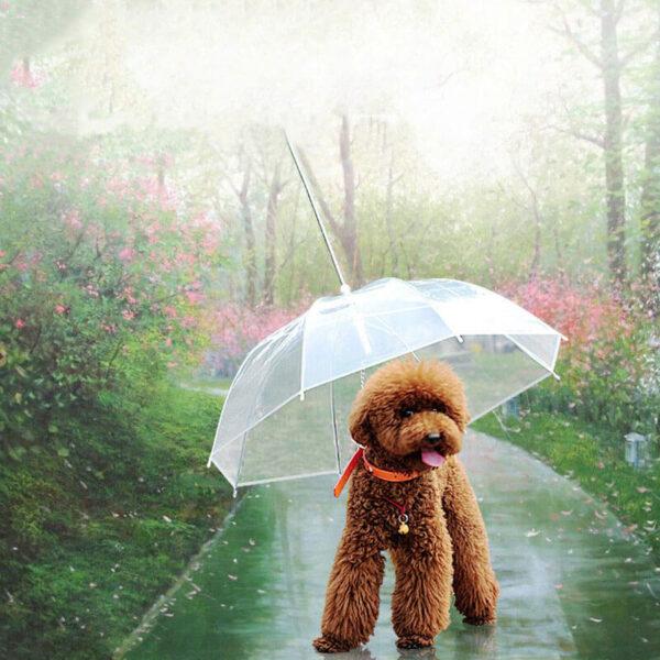Pudel pod parasolem z wbudowaną smyczą dla psa
