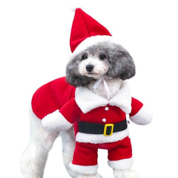 Świąteczne przebranie świętego mikołaja dla psa kota pies na białym tle