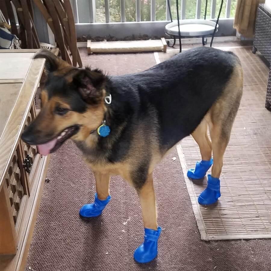 Silikonowe Buty Dla Duzego Psa Petinio Silboot Sklep Petinio Wszystko Dla Psa