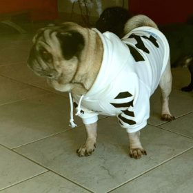 Streetwearowa bluza dla psa WOOF biała photo review