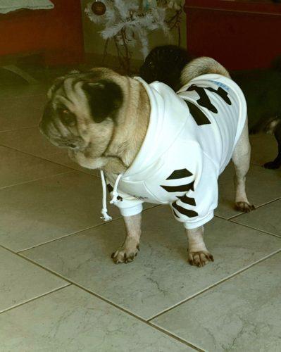 Bluza streetwearowa dla psa WOOF biała photo review