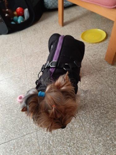 Kurtka dla psa z szelkami GO PAWS photo review