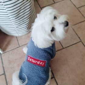 Sweter dla psa SATURDAY photo review