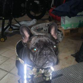 Kurtka dla psa PUPREME A BARKING PUP photo review