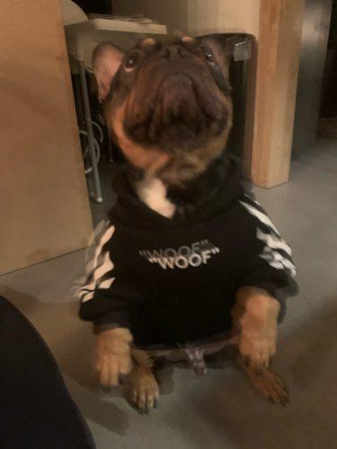 Bluza streetwearowa dla psa WOOF czarna photo review
