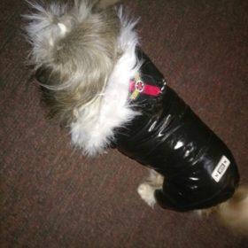 Kombinezon zimowy dla psa WINTERSHINE photo review