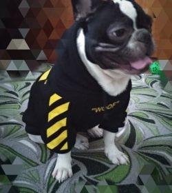 Bluza streetwearowa dla psa WOOF czarno-żółta photo review