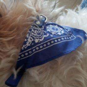 Skórzana rockowa obroża z chustą HIGHWAY photo review