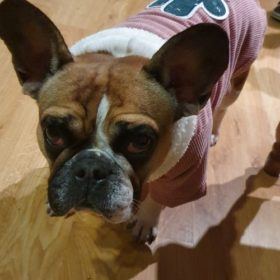 Sztruksowa kurtka dla psa CACTUS BEAUTY photo review