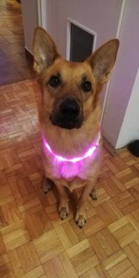 Silikonowa obroża LED LIGHTON USB photo review