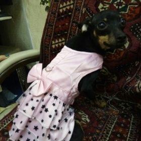 Letnia sukienka dla psa w gwiazdy PINKY STAR photo review