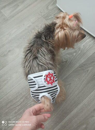 Majtki dla psa regulowane rzepem SAILOR photo review