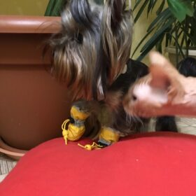 Buty dla psa ze ściągaczem HAPPY FEET photo review