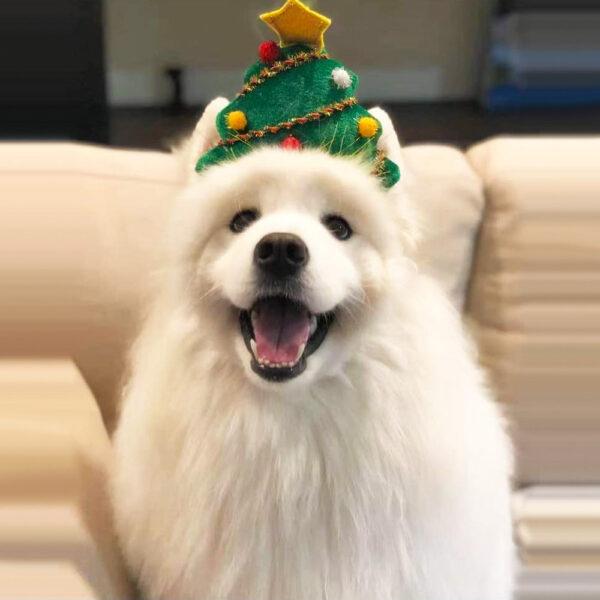 Opaska dla psa CHOINK na psie z bliska