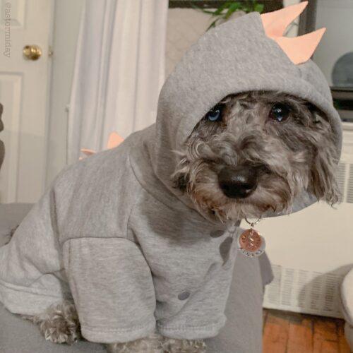 Bluza dla psa DINOZAUR photo review