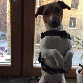 Mocne szelki dla psa z rączką TUCKER photo review