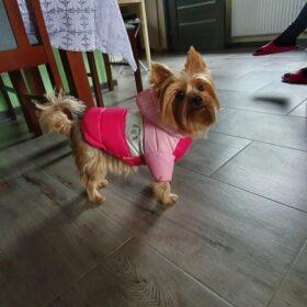 Ocieplana kurtka dla psa BINGO photo review