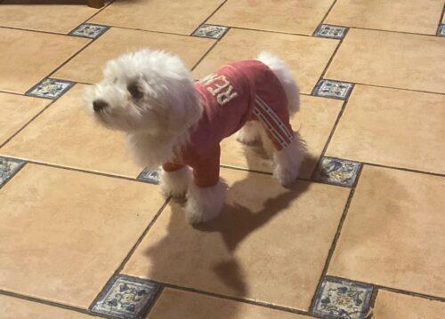 Welurowy dres dla psa VELVET photo review