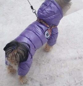 Ocieplany kombinezon dla psa z kapturem WINTERPERLE photo review