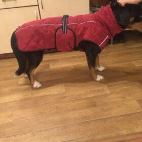 Pikowana kurtka dla dużego psa BRUNO photo review