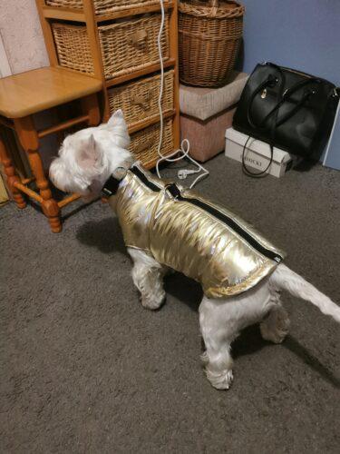 Metaliczna kurtka dla psa GLAMOUR photo review