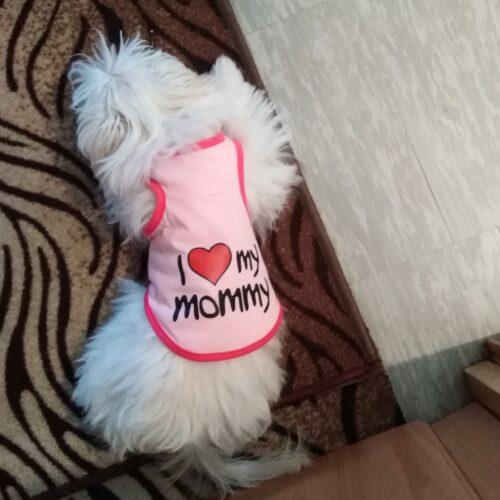 Koszulka dla psa MOMMY photo review